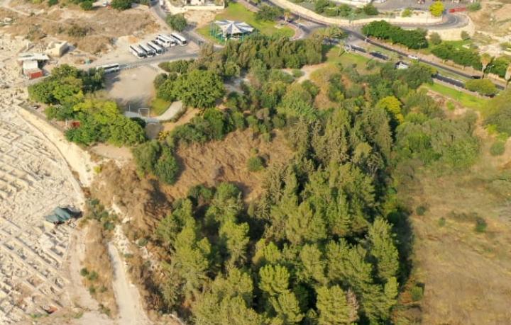 אזור צמחייה בבית שמש (צילום: s.t)