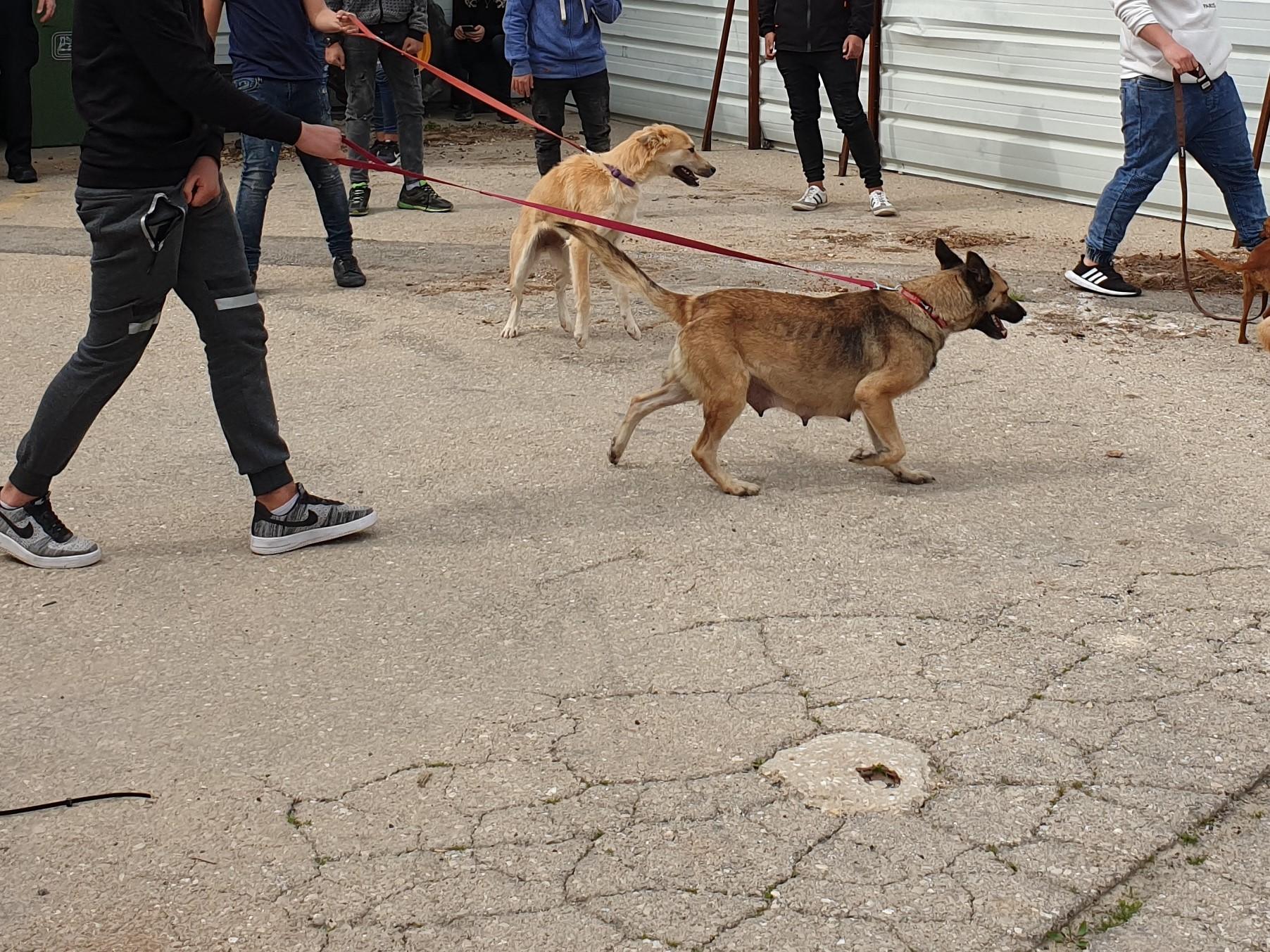 """פרויקט מיל""""ה בכלבייה (צילום: באדיבות מטה יהודה)"""