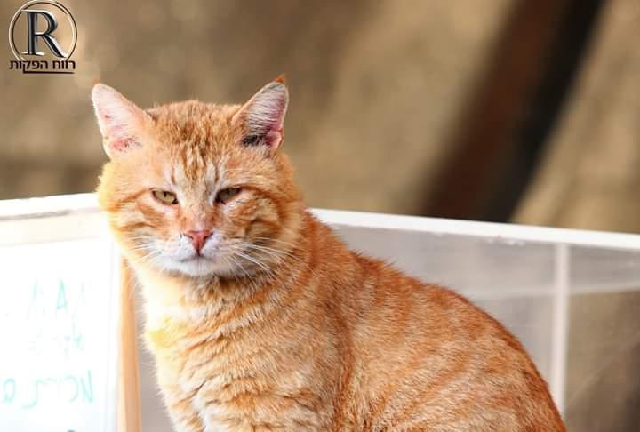 חתול רחוב בבית שמש (צילום: רווח הפקות)