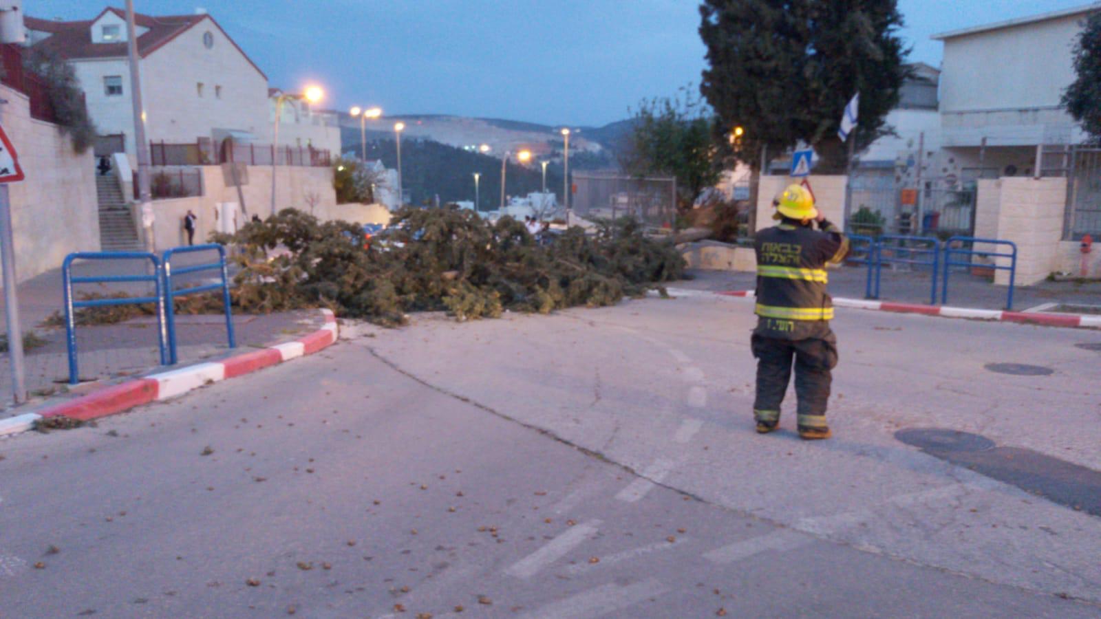 עצים קרסו בבית שמש (צילום: דוברות כבאות והצלה בית שמש)
