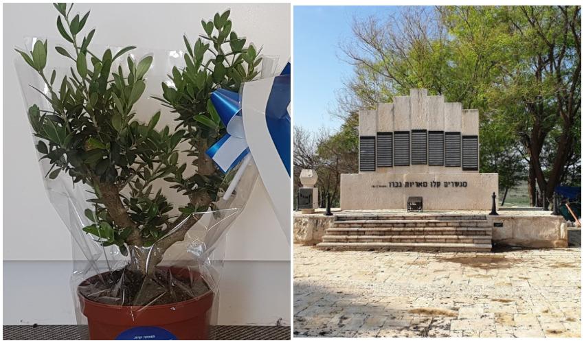 """האנדרטה לחללי צה""""ל בבית שמש, שתיל עץ הזית שיוענק למשפחות השכולות (צילום: גוגל מפות, באדיבות העירייה)"""