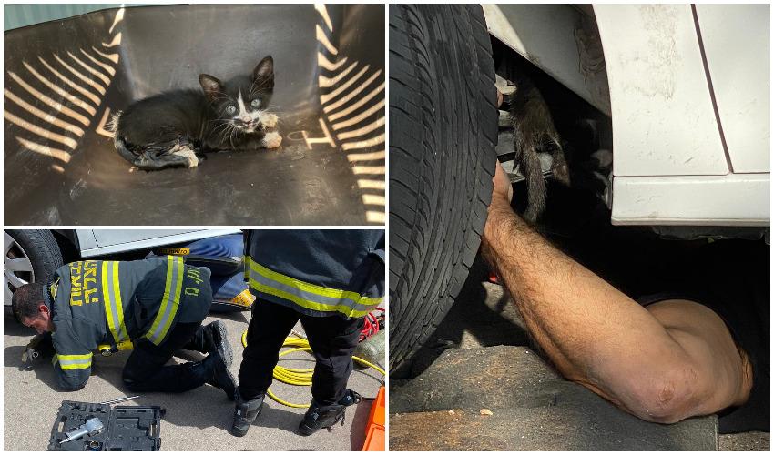 החילוץ של מיצי החתול (צילום: עיריית בית שמש)